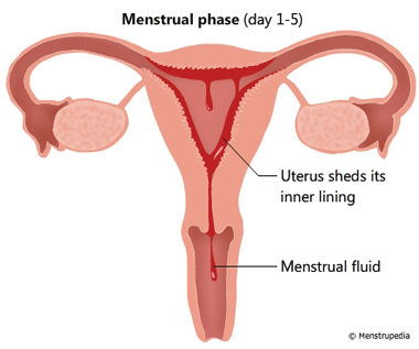 Uterine Tissue During Period