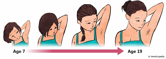 illustration of growth of hair in the armpits during puberty in girls from age 7 to age 19 - Menstrupedia