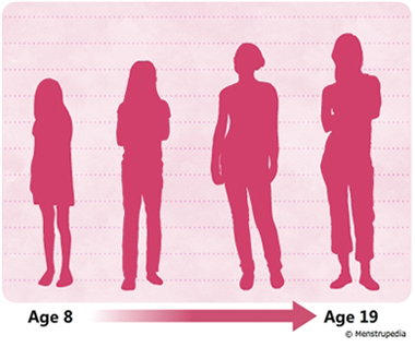 illustration of growth in height during puberty in girls from age 8 to age 19 - Menstrupedia